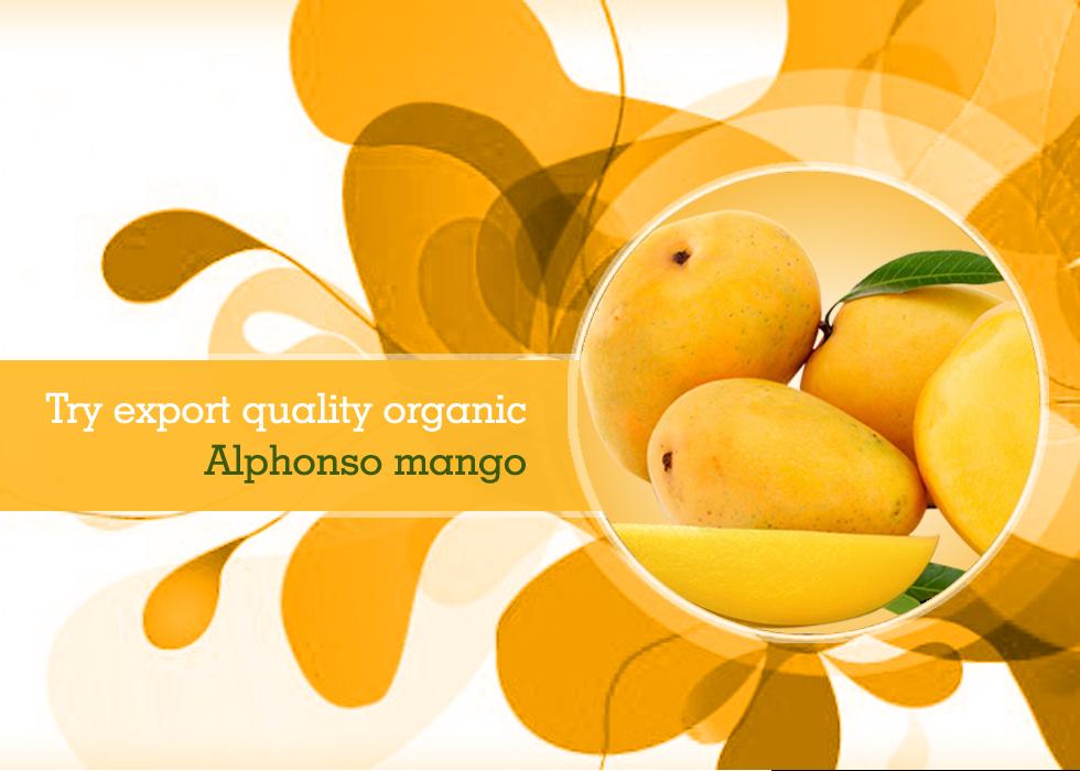 Try export quality organic Alphonso mango  | Organic Fruits