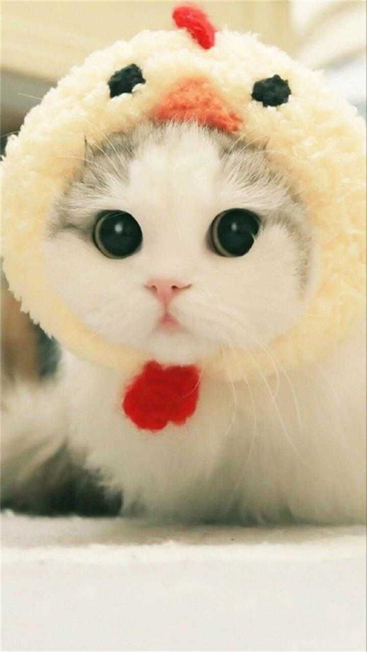 So Cute Puppy Cats Cat Cute Pets Pet Puppy Cats Cat Cute Pets Pet Anak Kucing Gemas Kucing Bayi Bayi Hewan
