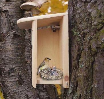 Hawk Eye Hd Bird Cam Bird Houses Bird Houses Diy Backyard Entertaining