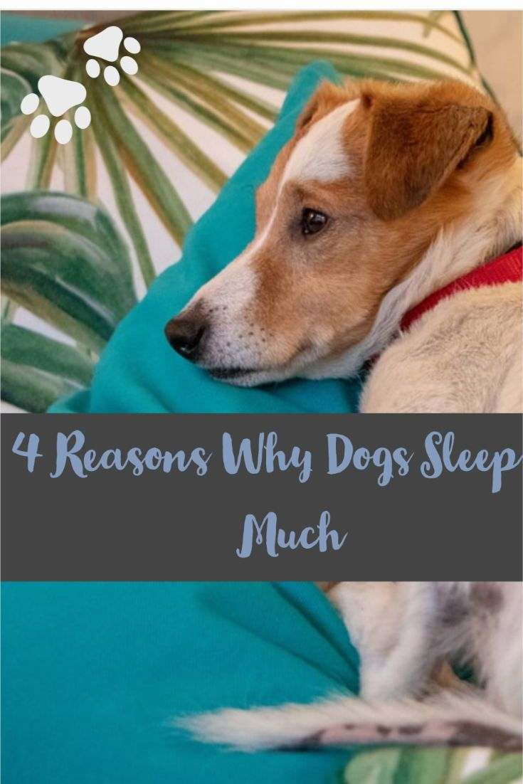 4 reasons why dogs sleep so much in 2020 sleeping dogs