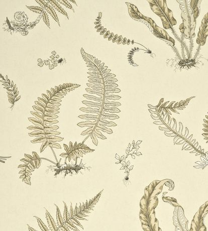 Ferns Wallpaper by GP & J Baker | Jane Clayton