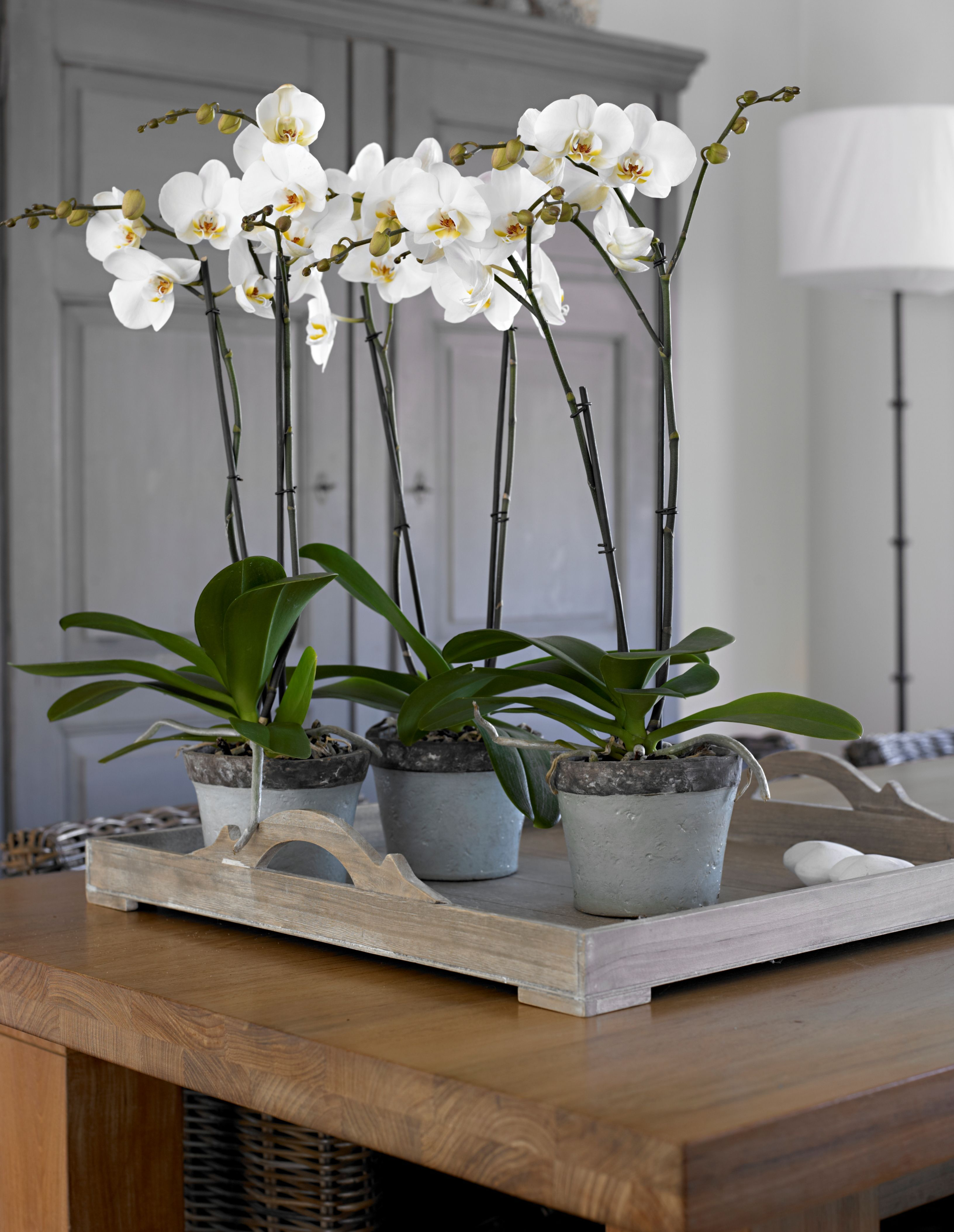 Lovely #orchids #Deco #Interior #Plants