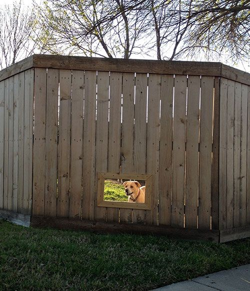 DIY Fence Window for Dogs | Noah Boopie Walter | Diy fence