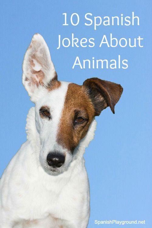 Spanish Jokes for Kids Animals Probiotics for dogs, Dog