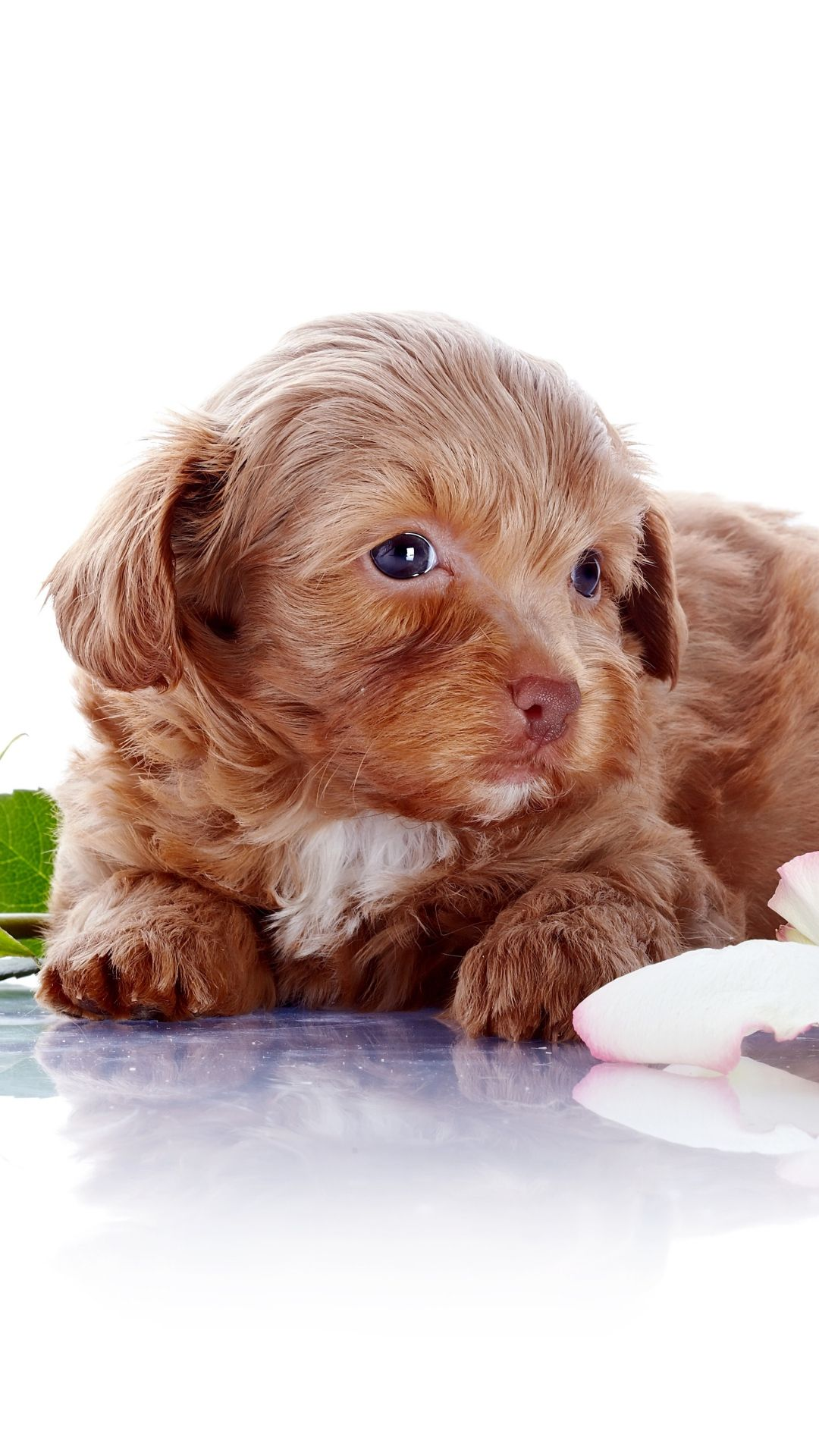 Puppy Dog Crawling On Ground iPhone 6 plus wallpaper