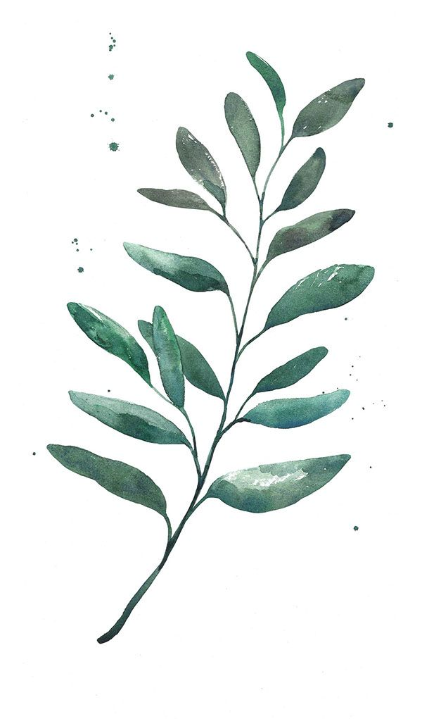 Watercolor leaf on behance pinteres for Watercolor greenery