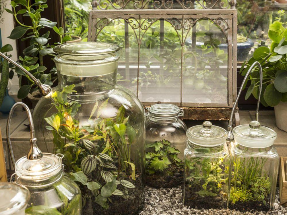 Flaschengarten Kleines Okosystem Im Glas Flaschengarten Pflanzideen Miniaturgarten