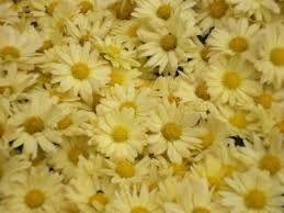 Resultado de imagem para flores de outono
