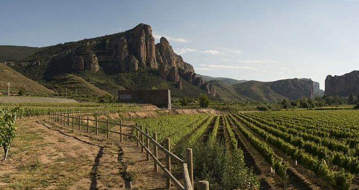 Bodegas Proelio, nueva bodega del grupo Palacios Vinoteca en La Rioja https://www.vinetur.com/2015020418079/bodegas-proelio-nueva-bodega-del-grupo-palacios-vinoteca-en-la-rioja.html