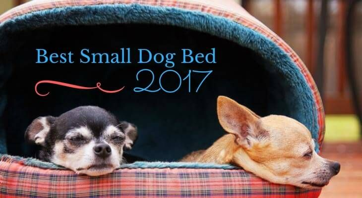 Best Small Dog Bed 2017 Dog Beds For Small Dogs Cool Dog Beds Best Small Dogs