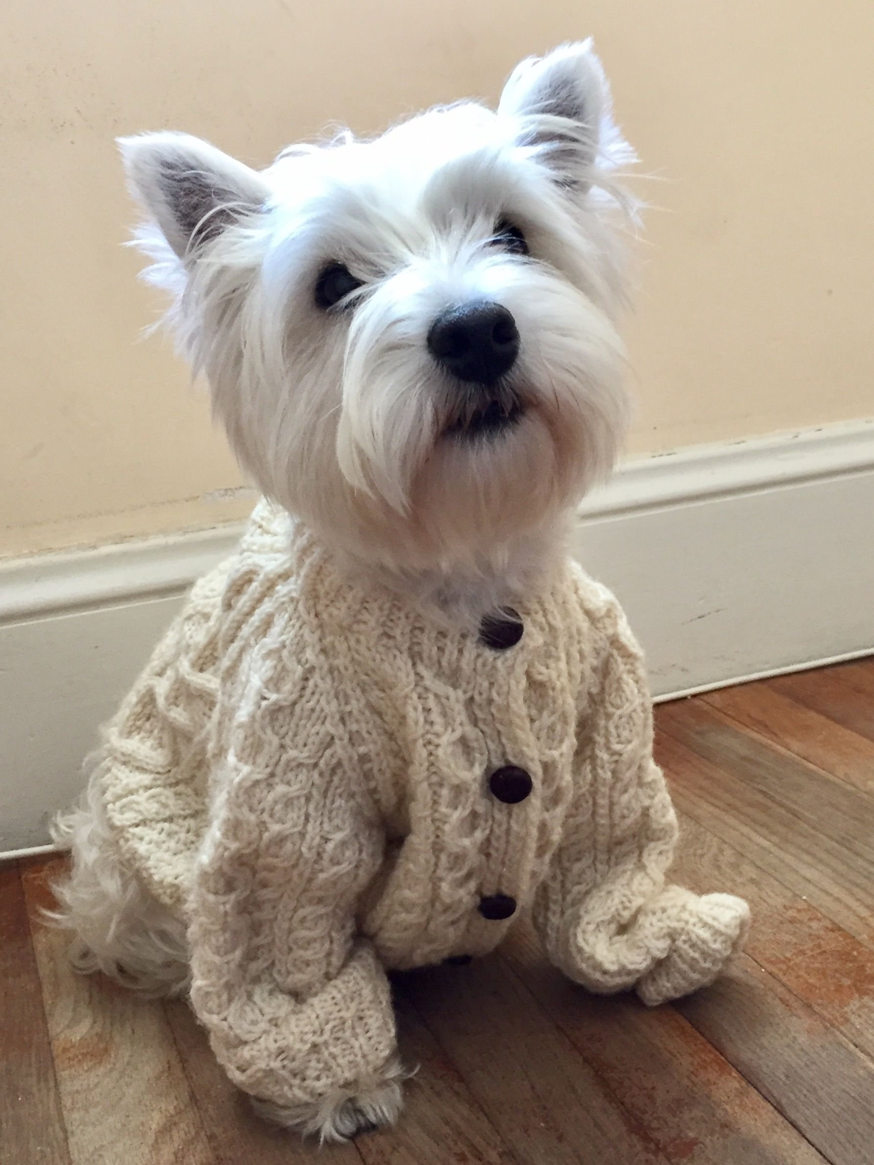 Great Sweater Unfortunately Hubby Won T Allow Clothes On Our Westie Cute Animals Baby Dogs Westie Puppies