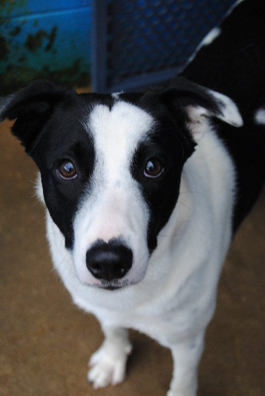 Hey There I M Diesal Come Meet Me In Noosa Fluffy Animals Cute Animals I Love Dogs