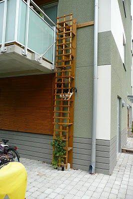 3bd6e4ba236f600e49f635363e1825a6 267×400 Pixels. Cat Stairs
