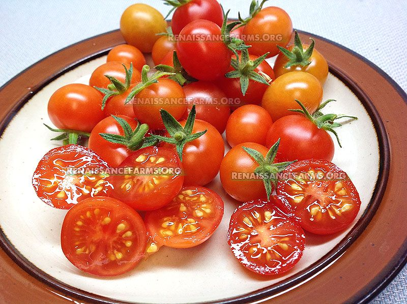 Vilma Micro Dwarf Tomato With Images Best Tasting 400 x 300