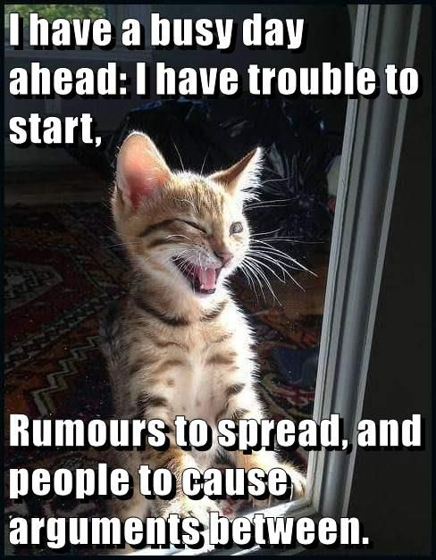 Lolcats Is The Best Place To Find And Submit Funny Cat Memes And