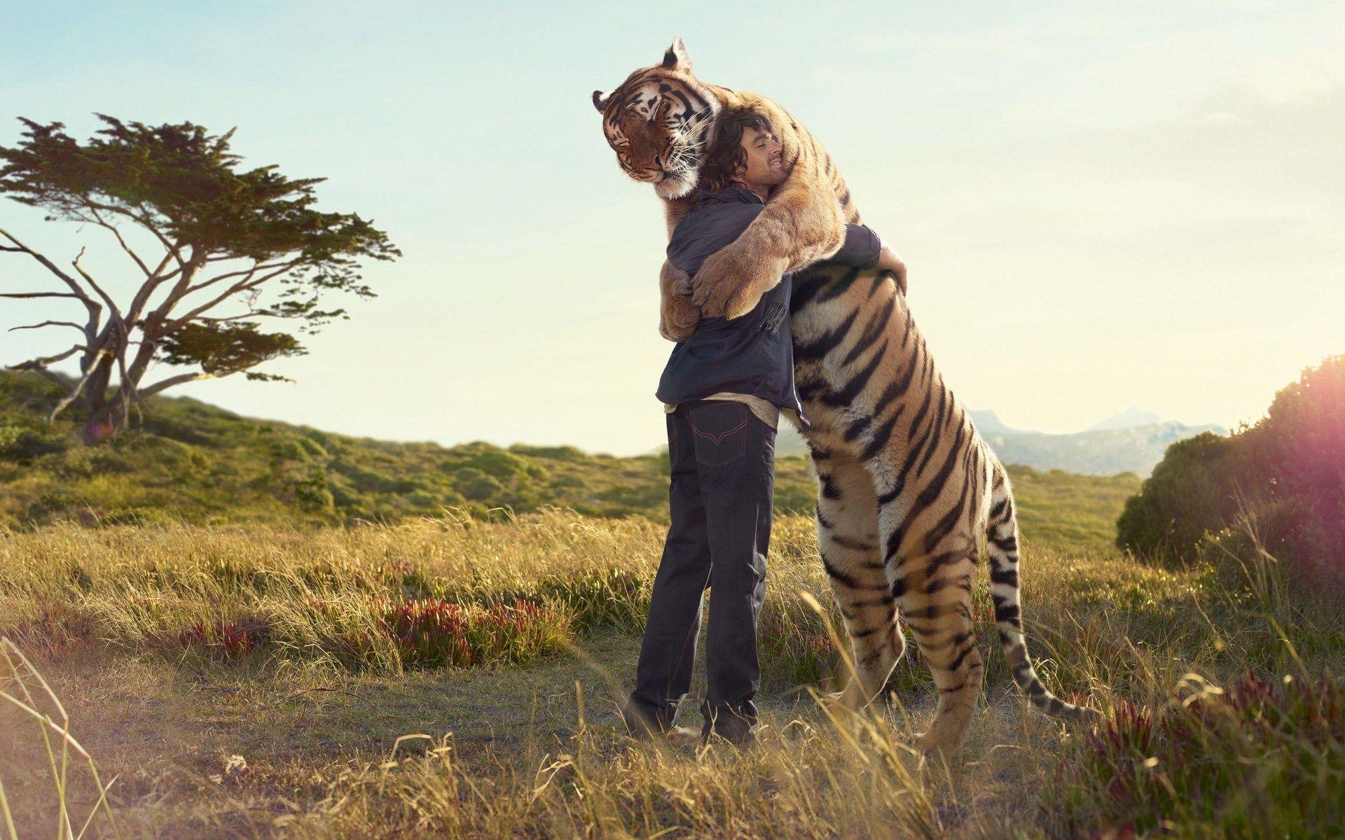 tiger hug HD Wallpaper