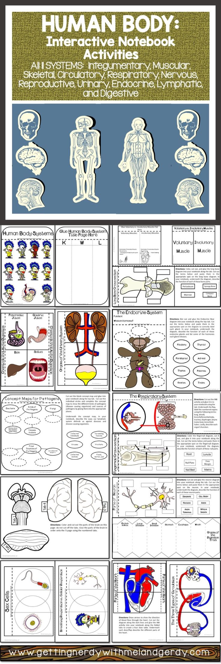Human Body Systems Interactive Notebook Activity Pack Biology