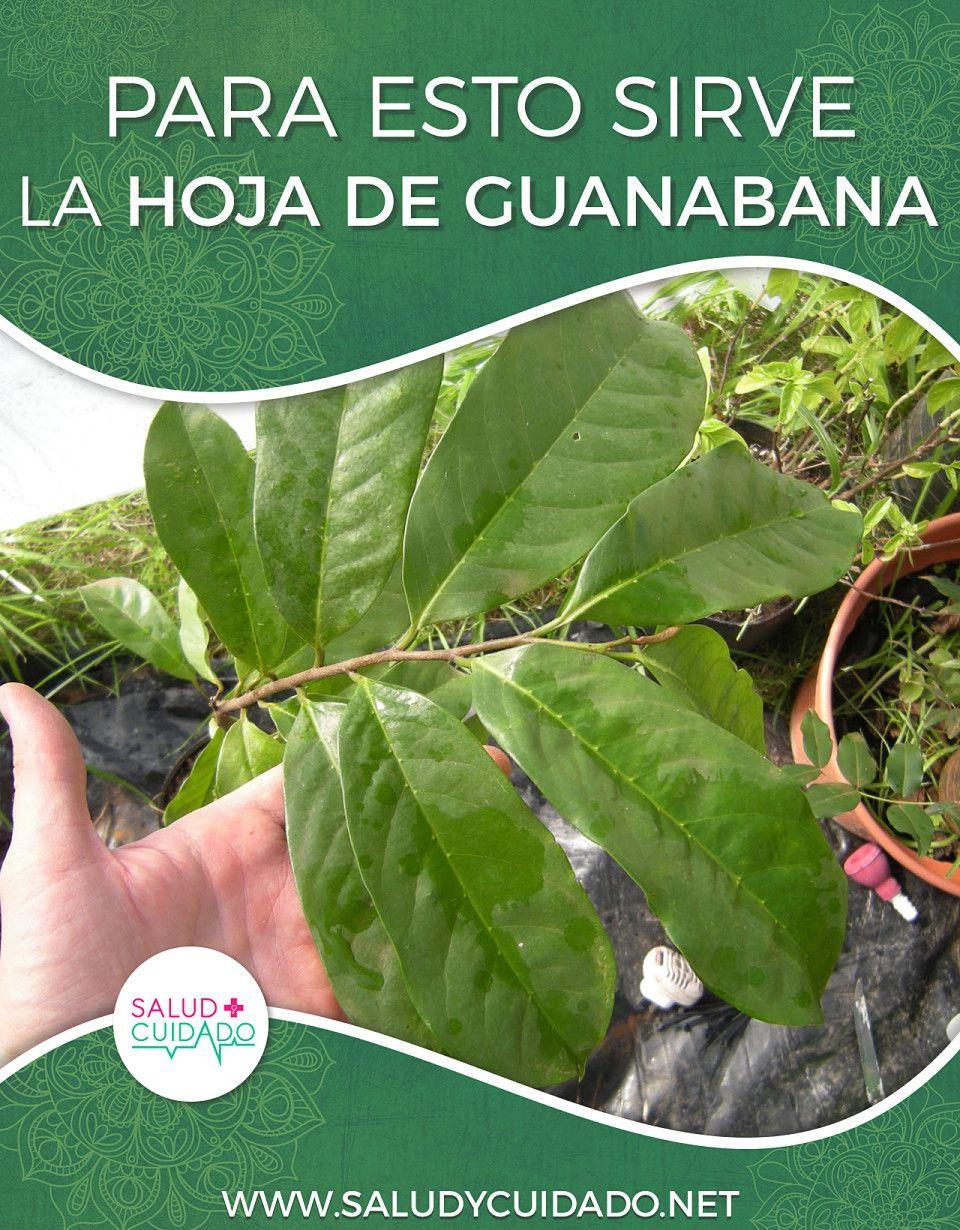 Las hojas de guanabana sirve para adelgazar