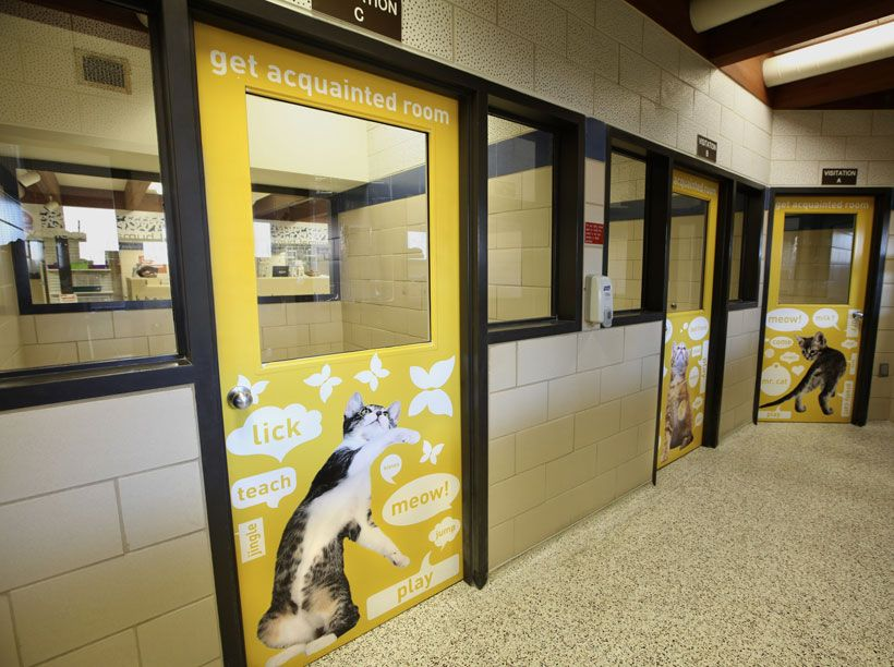 Get Acquainted Room For Humane Society Design