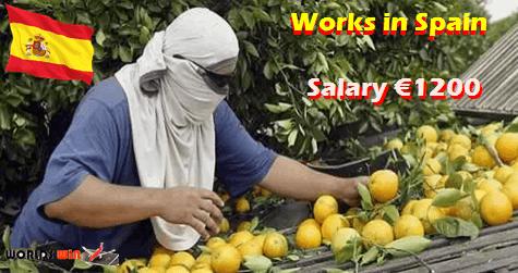 Spain Farm Workers Jobs Vacancies Seasonal Work Job Spain