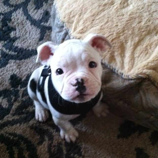 Cant Even Handle This Guy S Cuteness Cute Animals Puppies