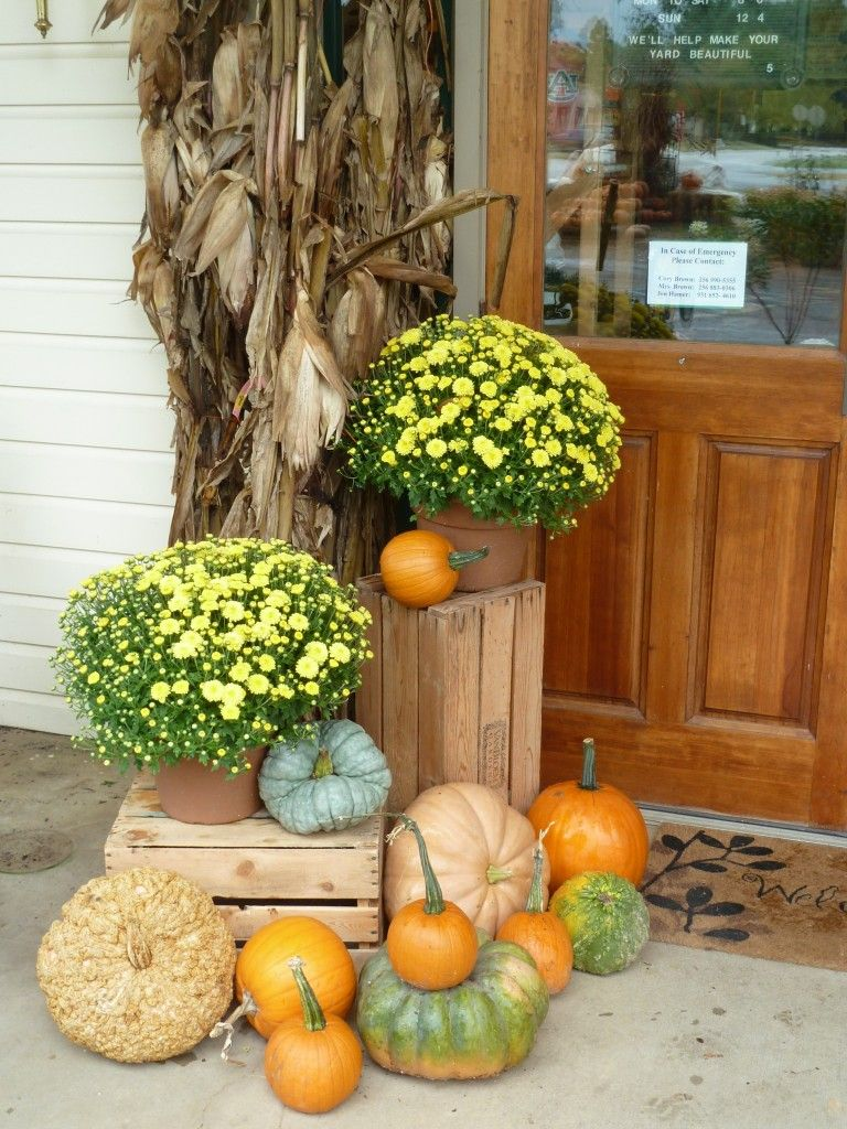 Gorgeous front porch decor cornstalk and mums fall Fall outdoor decorating with pumpkins