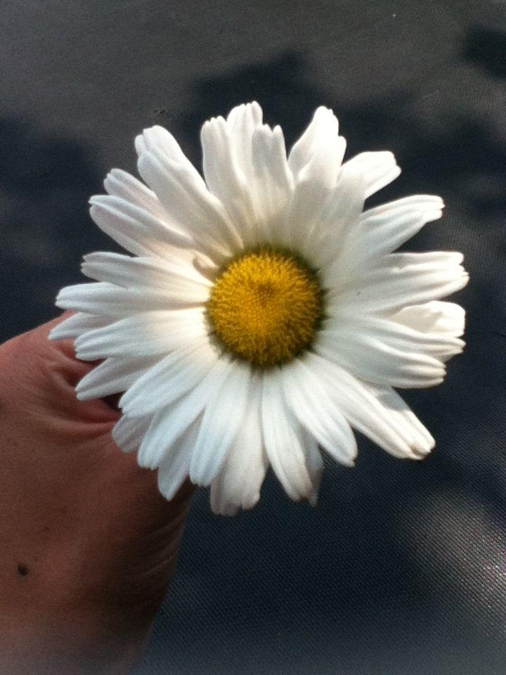 Daisy! Love!