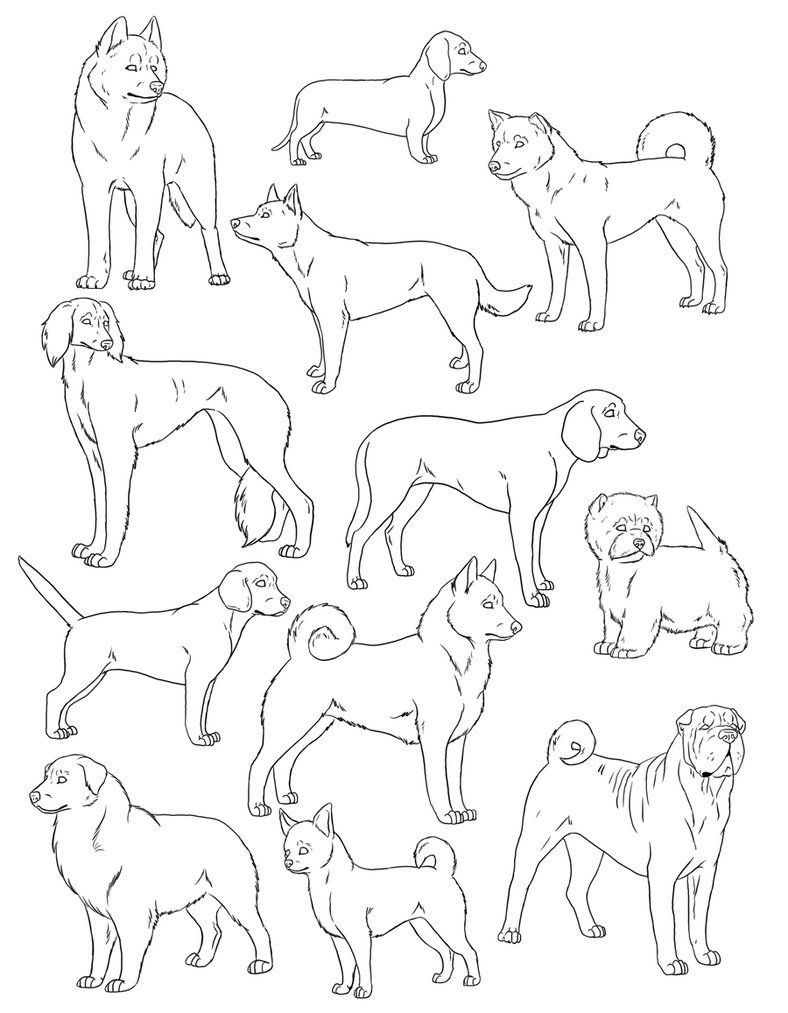 Australian Shepherd Coloring Pages In 2020 Dog Line Dog Line Art Animal Line Drawings