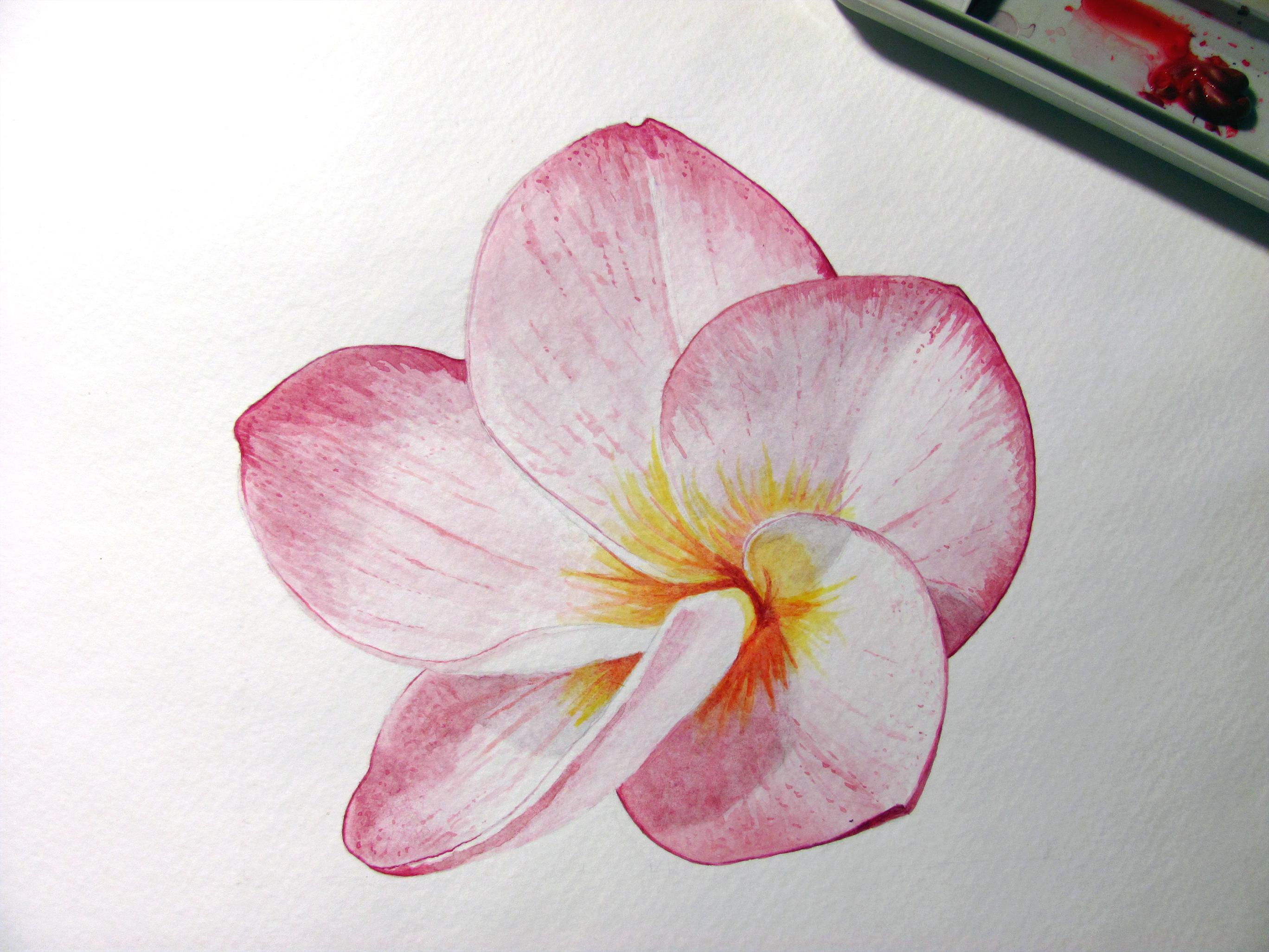Watercolor plumeria, painted by me in 2015 #watercolors #plumeria #watercolor paintings