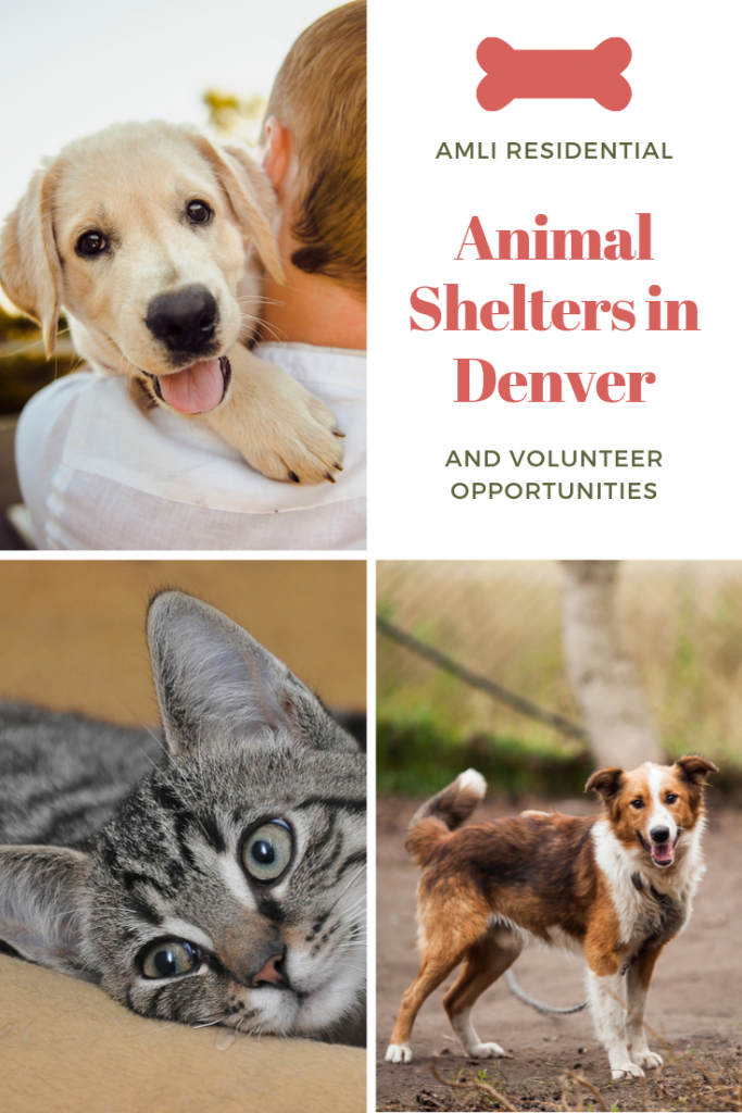 Volunteering At Animal Shelters In Denver In 2020 Animal Shelter Animals Homeless Pets