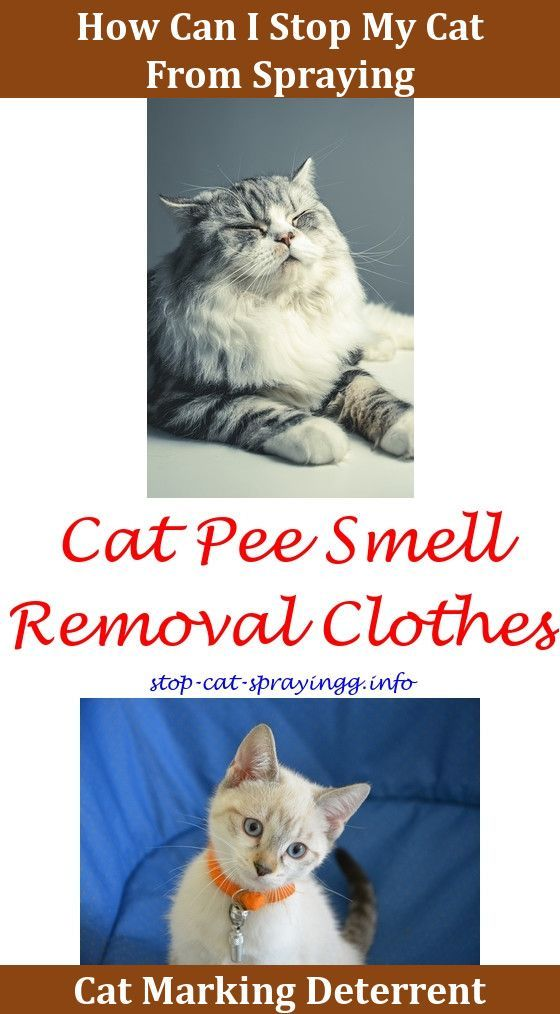 how to make your house clean from cat smell