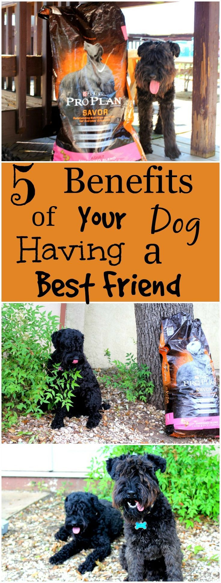 5 Benefits Of Your Dog Having A Best Friend Dogs Pet Care Tips Pet Insurance Reviews