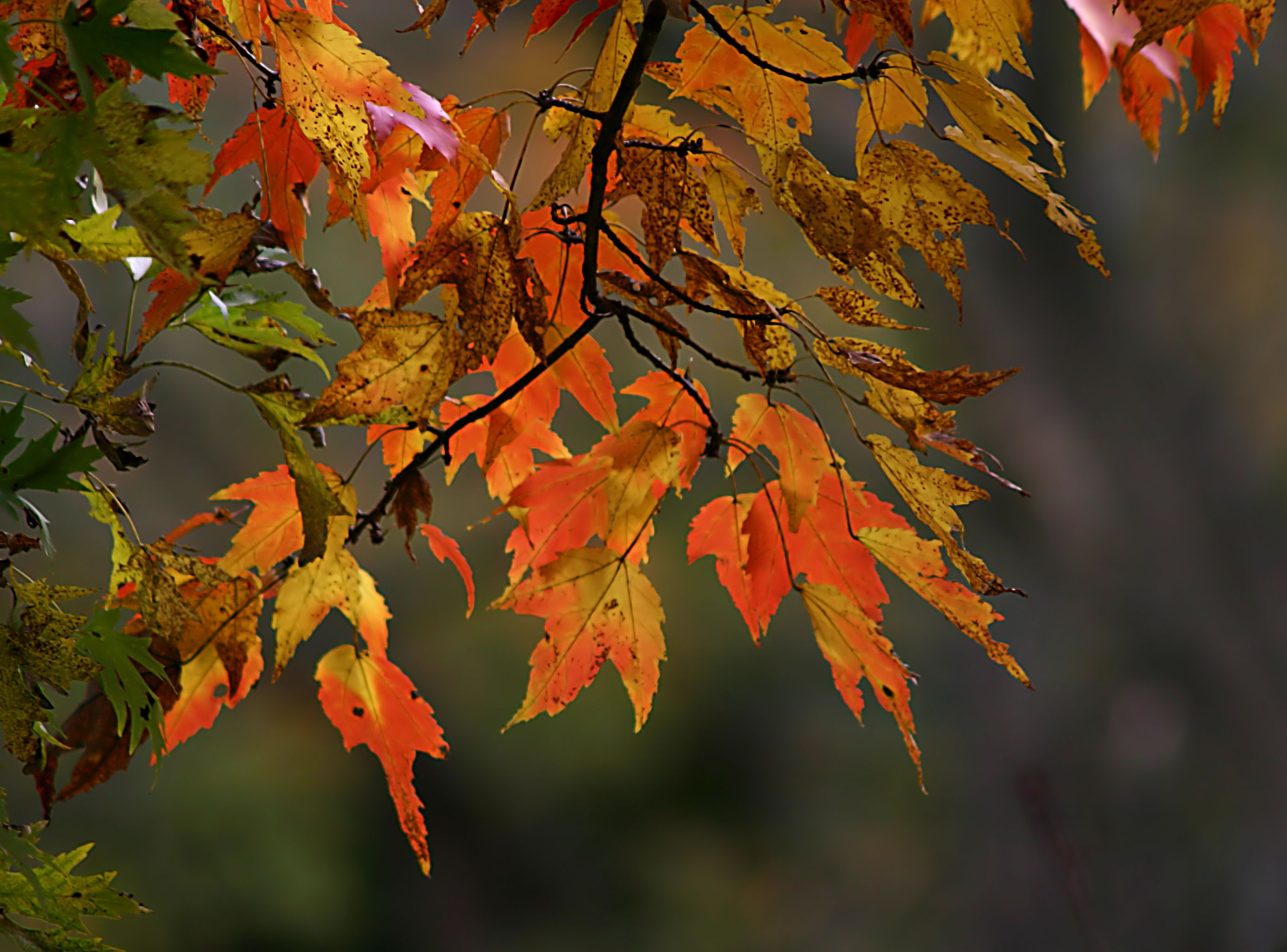 images of autumn flowers | Autumn Flowers Bring A Vibrant Display Of Bright Seasonal Colours