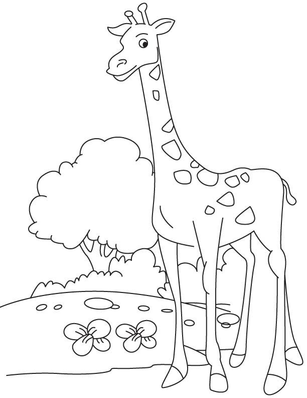 Tall Giraffe Calf Coloring Page Coloring Pages Coloring Pages For Kids Giraffe