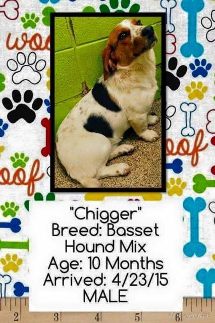 Dog Finder Adopt A Dog Or Cat Near You Basset Hound Basset Hound Beagle Dog Finder