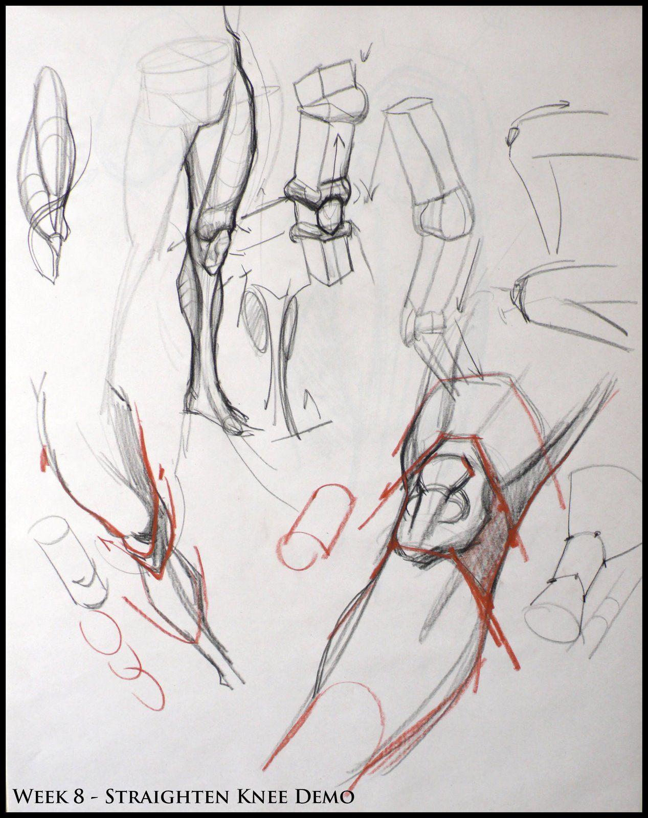 Analytical Figura Disegno SP08: Week 8 - Leg & Knee Struttura Demo ...