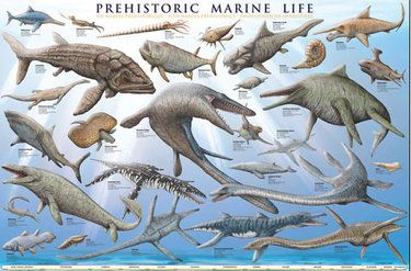 Prehistoric Marine Life poster depicting 27 different ancient creatures