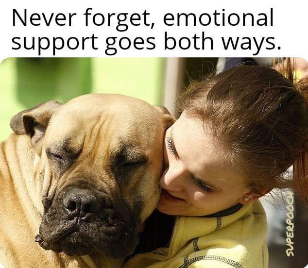 superpooch.org Cute Funny Inspiring Dog Memes. #dogs #dogmemes #superpooch #doglife #doglovers #dogquotes #emotionalsupportdogs