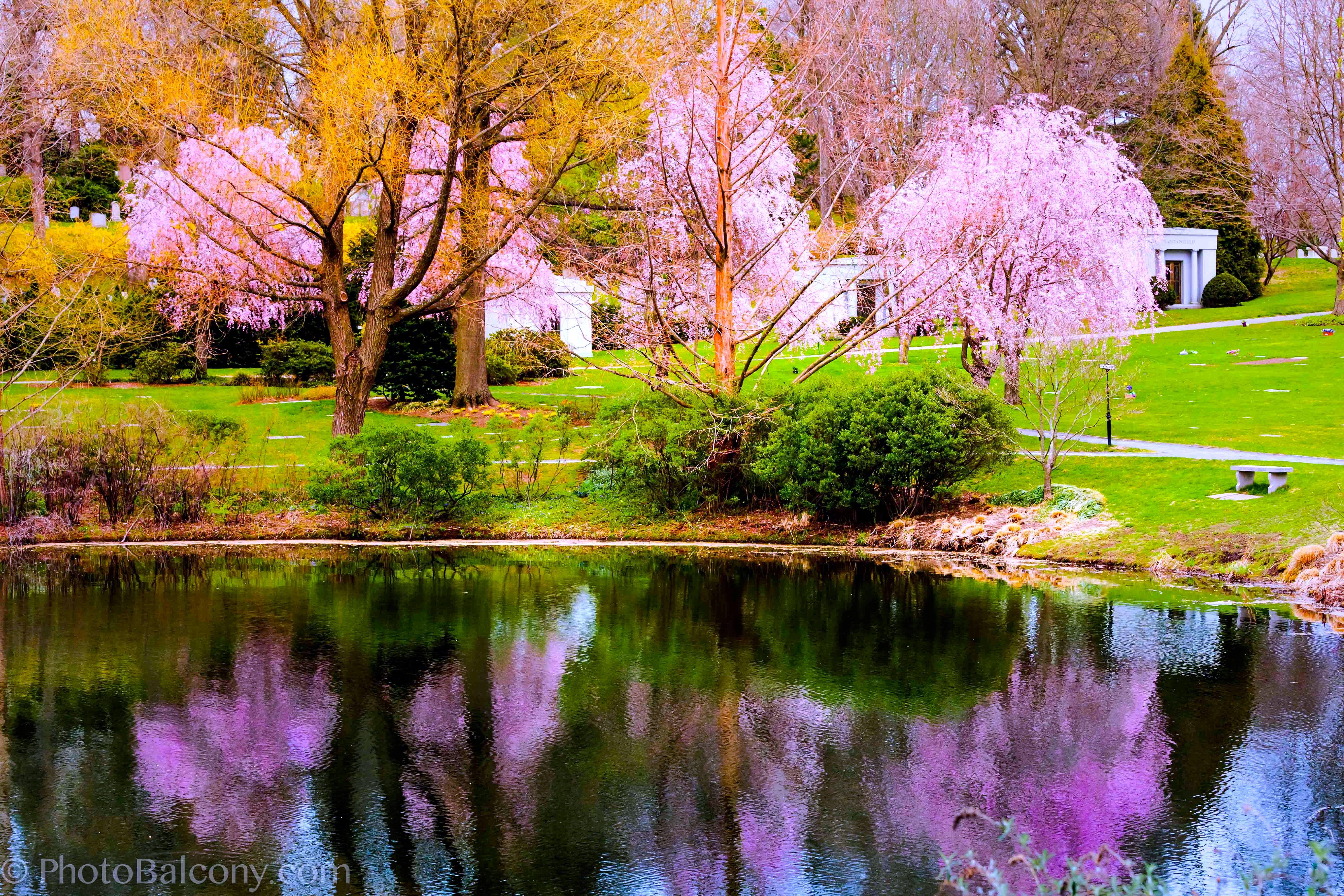 Spring Impression... Spring scenery,