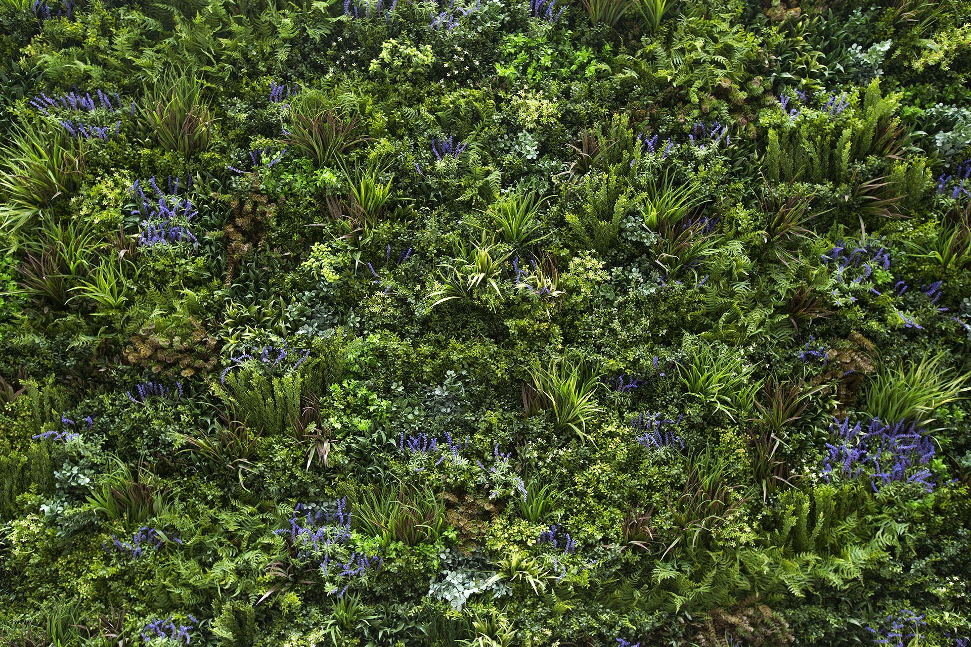 Green Walls Artificial Wall Garden Design Photography Architecture