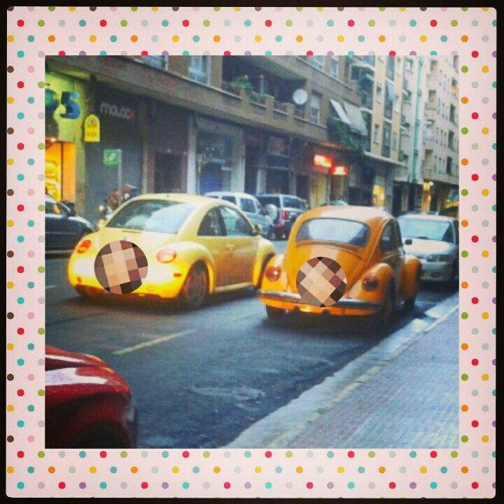 Una familia de escarabajos amarillos