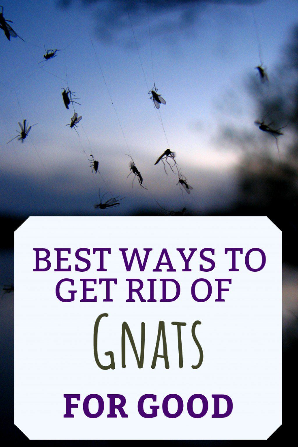 What Causes Gnats and How to Get Rid of Them -   18 how to get rid of gnats in the house ideas