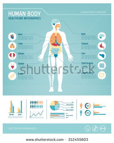Human Body Health Care Infographics With Medical Icons Organs