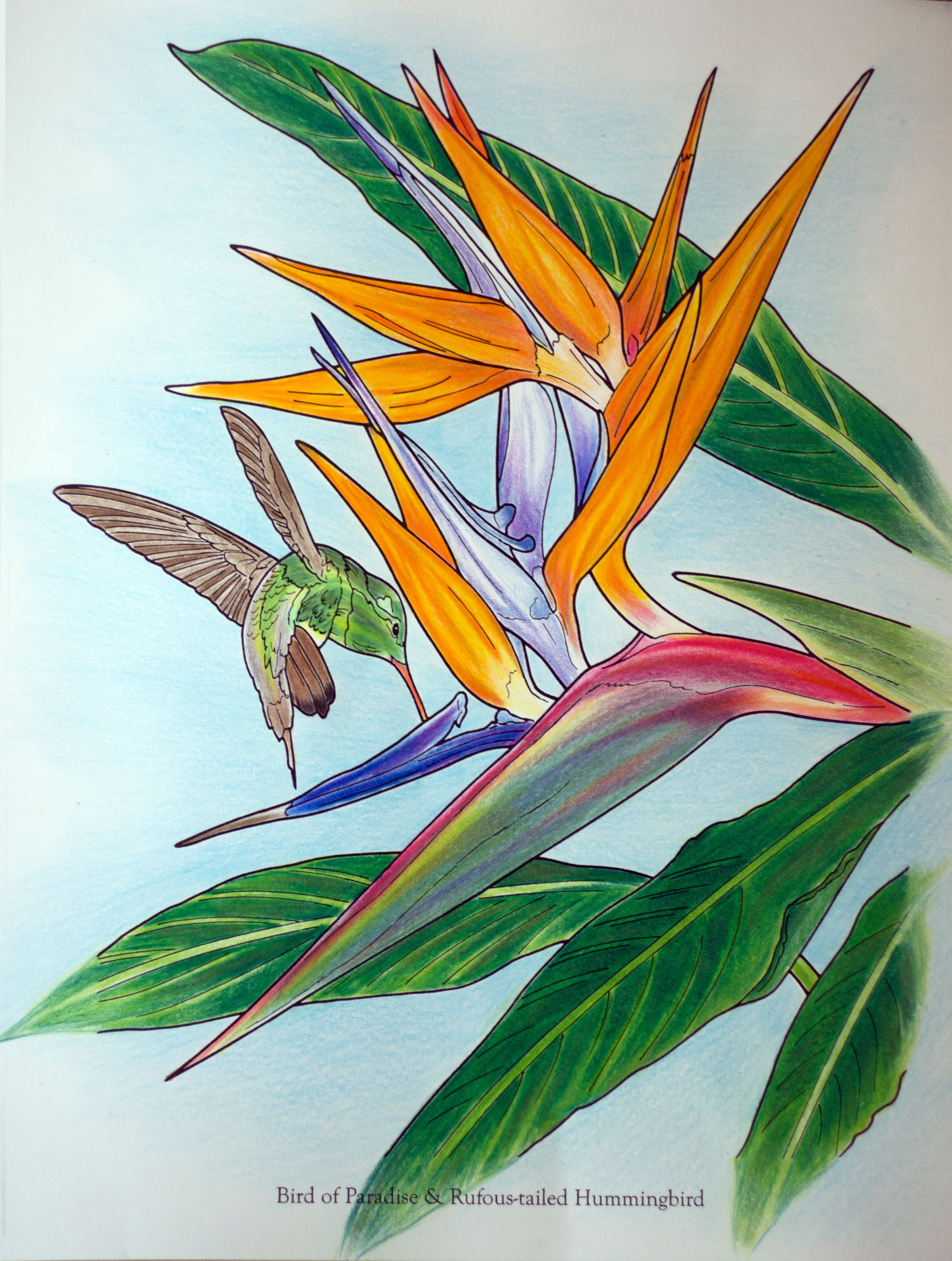 Lina 18 Division From In Full Bloom Coloring Book Nature In