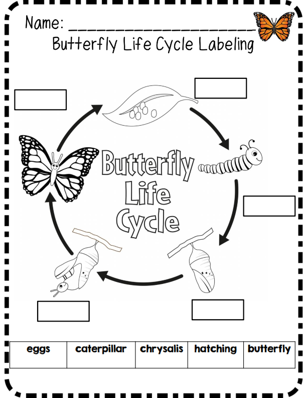 Butterfly Cross Curricular Unit Common Core Aligned Butterfly Life Cycle Life Cycles Animal Life Cycles