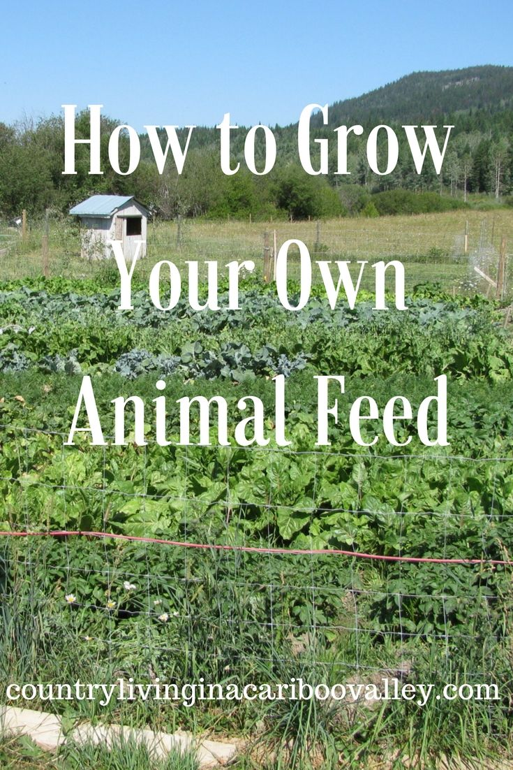 how to grow fodder for goats