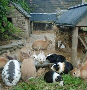 Lovely stone cottages for bunnies. its not wise to mix guinea pigs and rabbits tho, they tend to bully one another