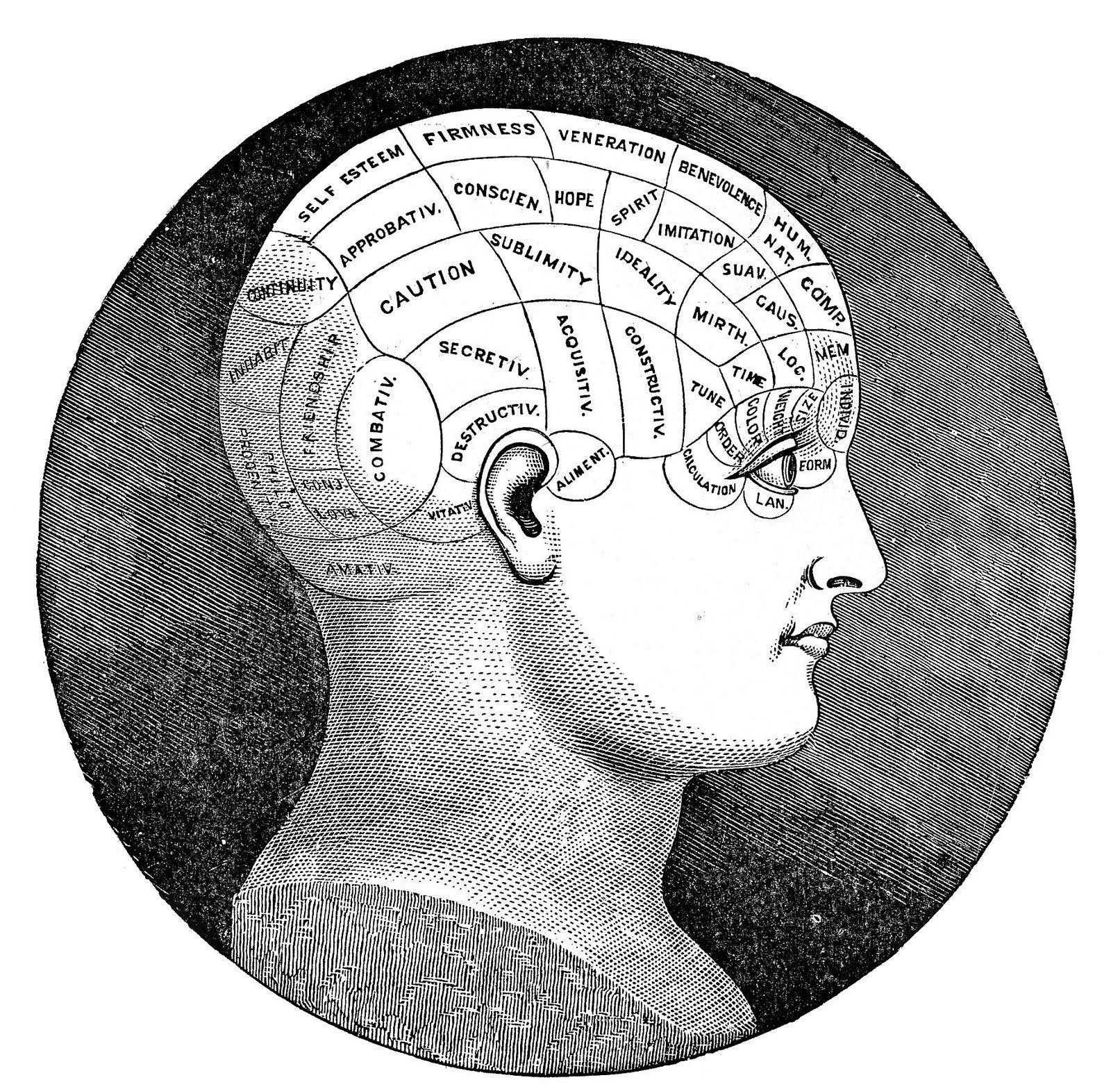 Vintage Clip Art Antique Phrenology Head The Graphics Fairy Clip Art Vintage Phrenology Head Phrenology