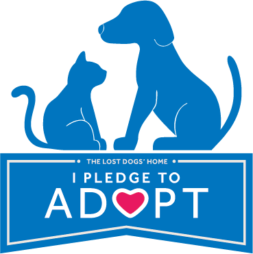 Pin By Jane Kara On Pets Don T Shop Adopt With Images