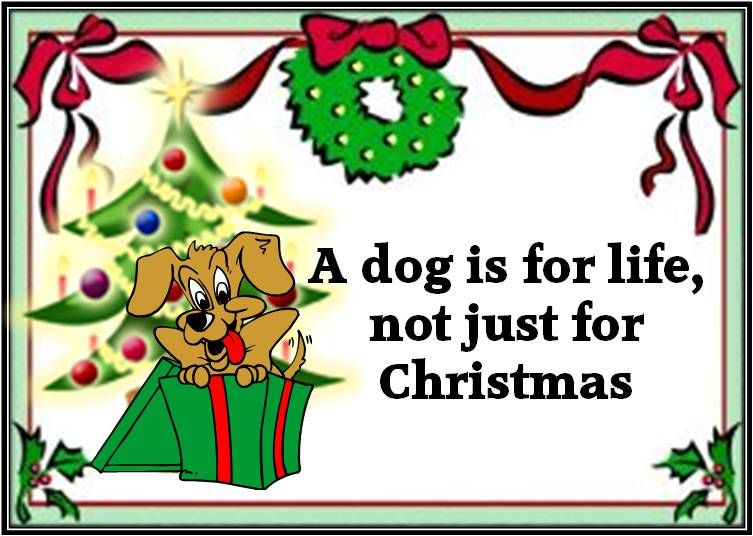 A Dog is for life not just for Christmas | Dog Quotes & Jokes ...